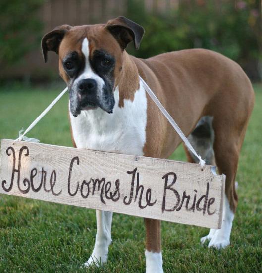 Incluye a tu perro en la ceremonia