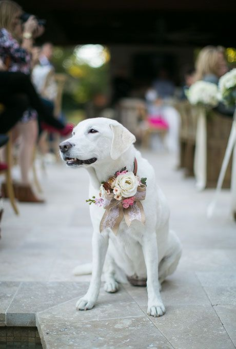 Tu mascota entrando a la ceremonia